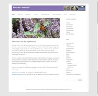 Kansas Lavender
